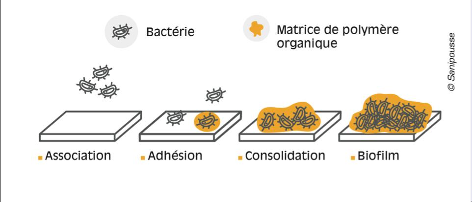 developpement biofilms restauration biofinder